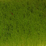 10-OliveGreen