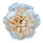 893040-3-cream